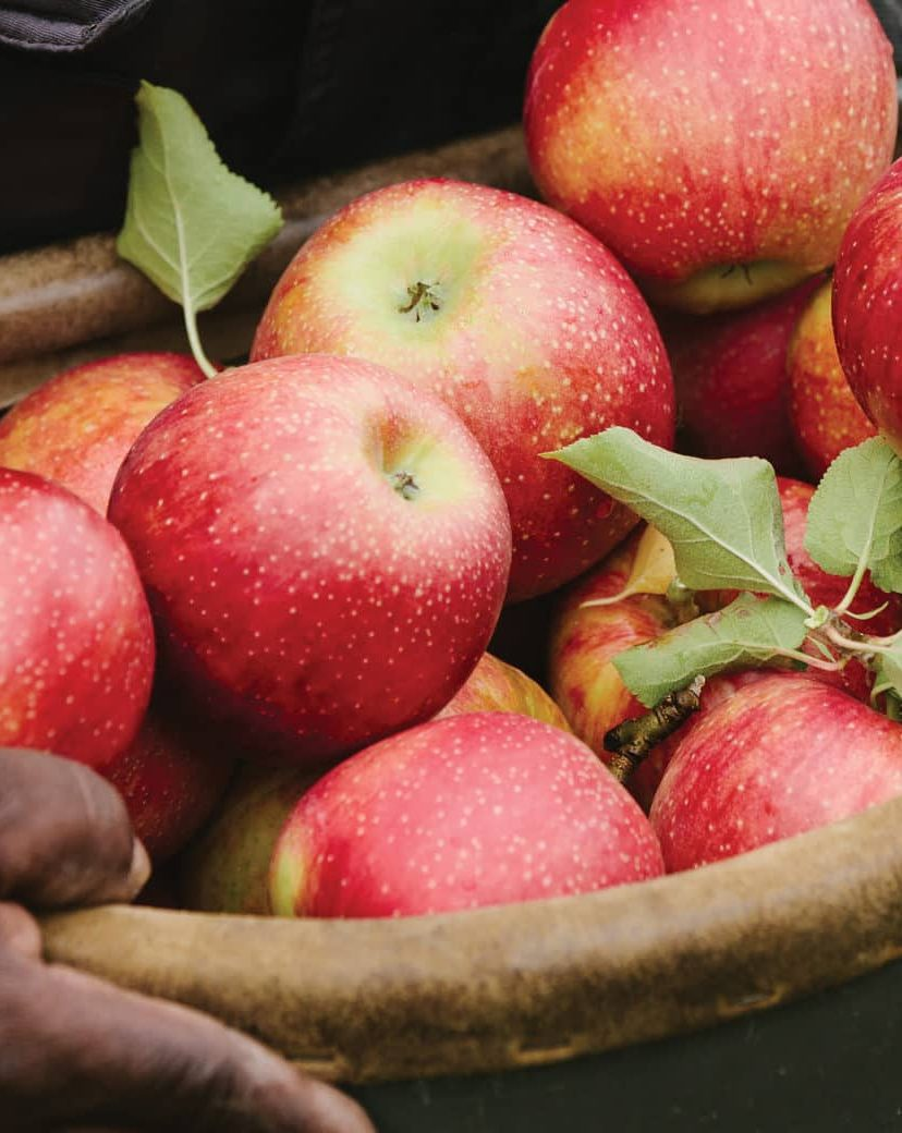 Northeast orchards launch 2019 season with Eco certification