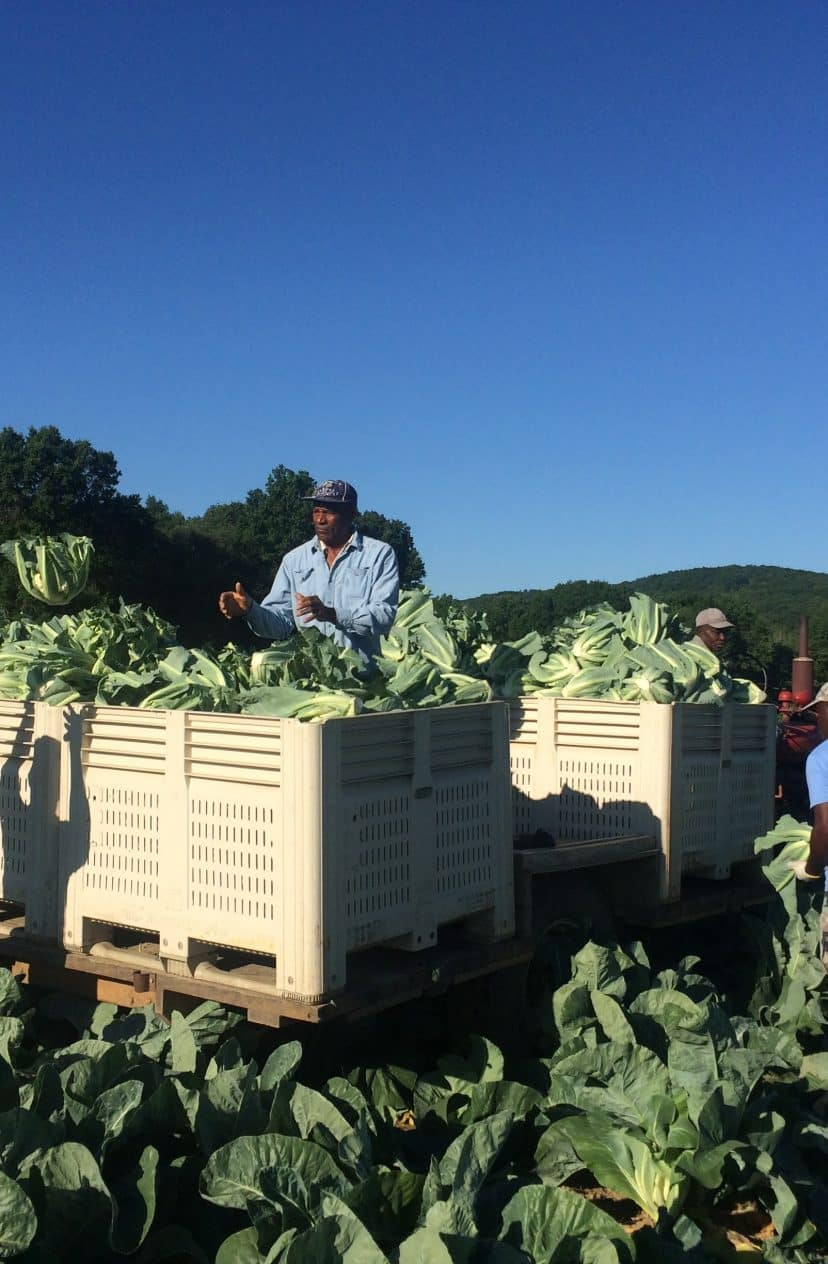 The quest for local-grown broccoli