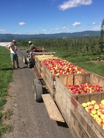 champlain apples