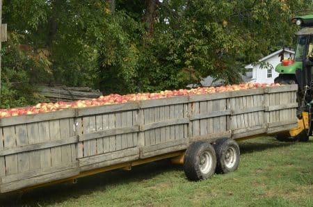 lyman orchard apples