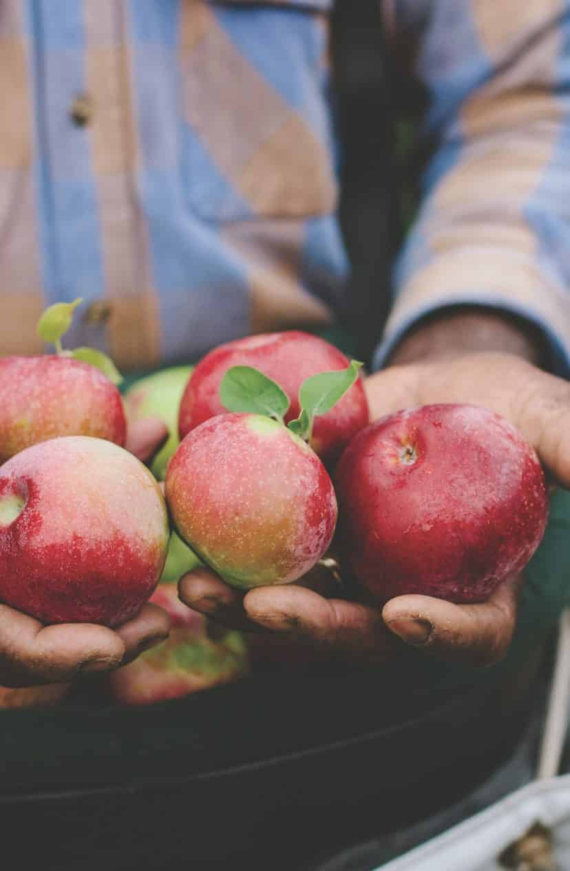 The Disappearing East Coast Apple