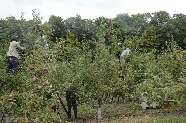 14 orchards  in 6 states are Eco-certified in 2019