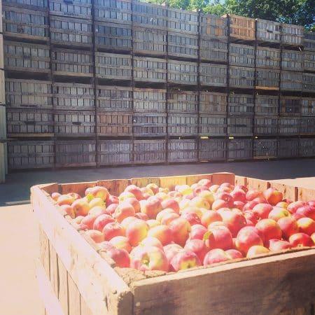 sunrise apples