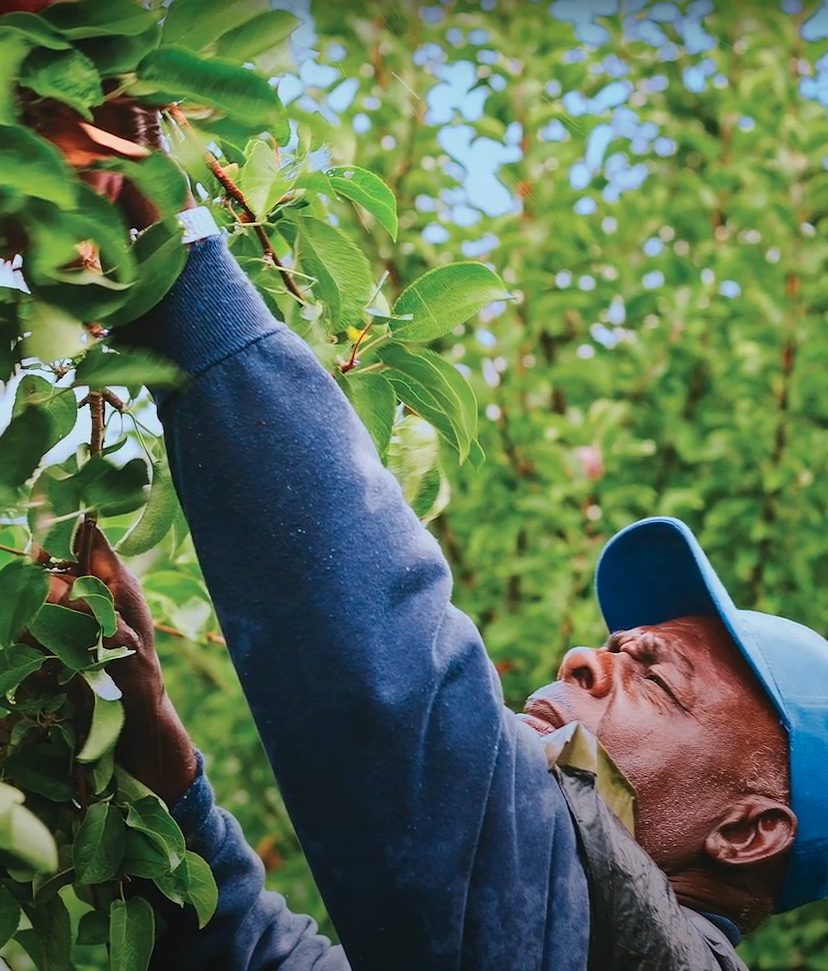 Righteous Produce | The Farmworkers
